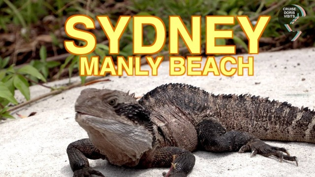 SYDNEY MANLY BEACH GUIDE and list of beaches