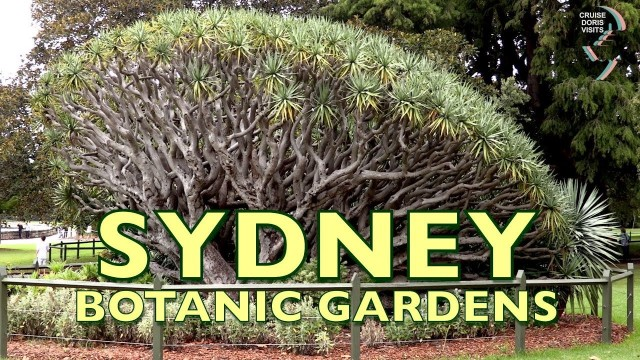Sydney Botanical gardens are right opposite the tender dock and Opera House